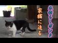 【木枯らしポンタシリーズ】家猫に迫る野良猫~~花吹雪と猫たち